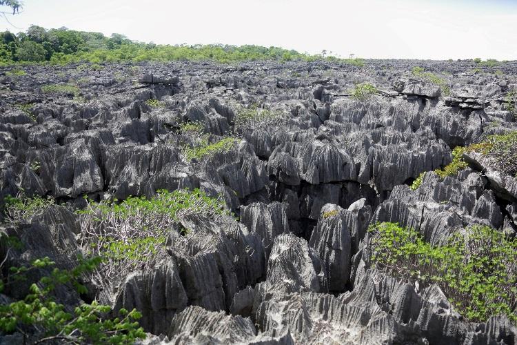 Tsingy Diego FHORM